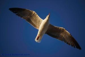 sea_birds-10