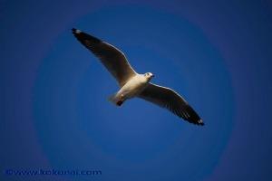 sea_birds-11