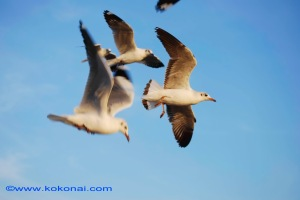 sea_birds-3