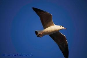 sea_birds-9